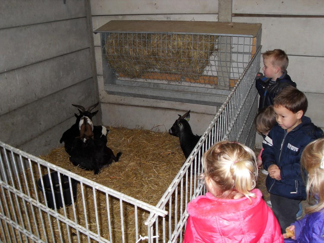 Kinderen komen allemaal kijken naar de babygeitjes