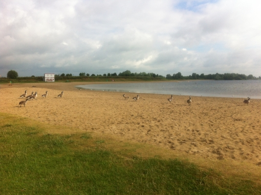 Zonnebaden tussen de ganzenpoep (update)