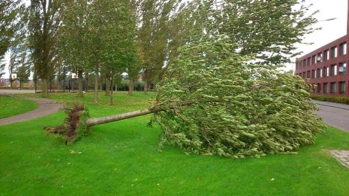 Stormschade in Stadshagen (foto's)