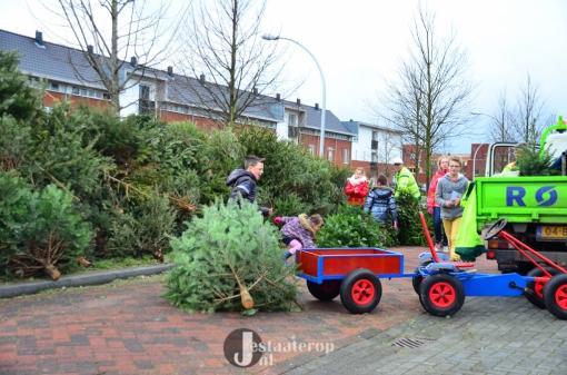 Kerstbomen verzamelen voor een zwemkaartje (foto's)