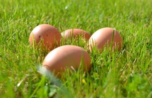 Stadshagen viert Palmpasen met eieren zoeken