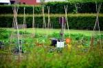 Kinderen tuinieren in jeugdtuin Stadshagen