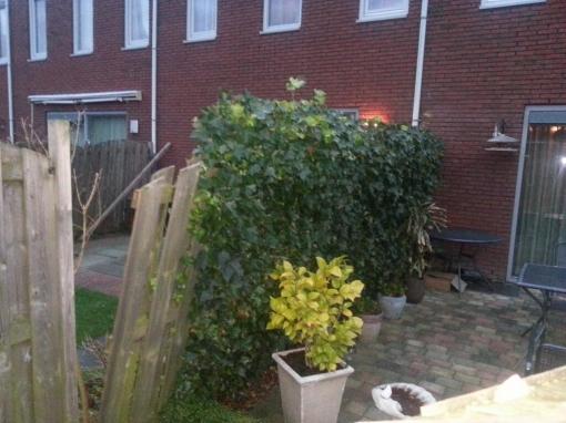 'Kerststorm' veroorzaakt lichte schade in Stadshagen