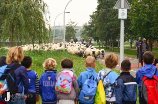 100 extra schapen voor begrazing Breecamp-Oost