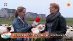 Vertrek schaapskudde uit Stadshagen in Man Bijt Hond
