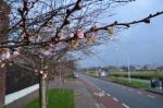 Hoera: de lente ontwaakt in Stadshagen