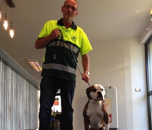 Verdwaalde boxer gevonden bij Veenmos