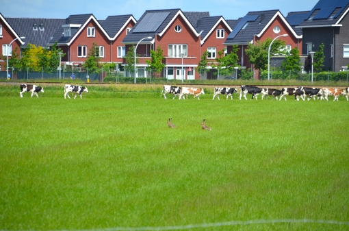 Geen AZC in Stadshagen; De Tippe wel op shortlist