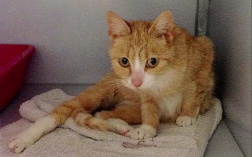 Katten uit Stadshagen gedumpt in Westerveldsebos