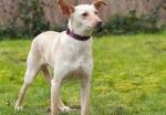 Radeloze baasjes zoeken vermiste hond