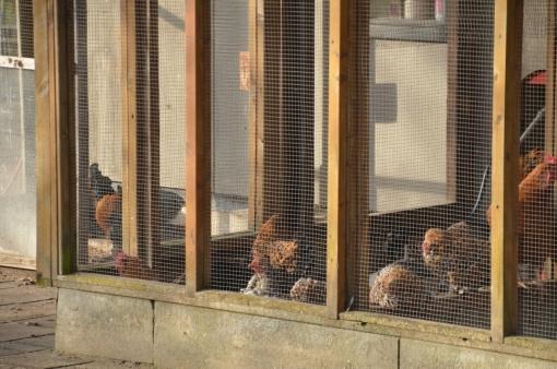 Zestig dode eenden door vogelgriep buiten Stadshagen
