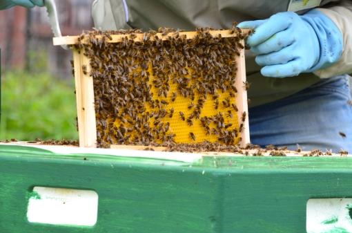 In actie voor de bijen in Stadshagen tijdens NLdoet