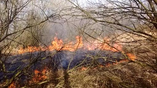 Bosbrand in Twistvlietpark (foto's)