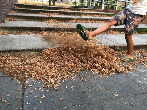 Het lijkt wel herfst: ROVA gaat bladen ruimen