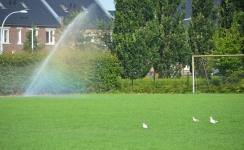 Vitens: extreem hoog watergebruik, wees zuinig