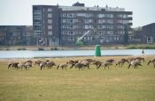 Bezoekers Milligerplas hekelen ganzenpoep