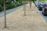 Natuur in Stadshagen zucht onder droogte