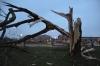 Bliksem splijt grote boom