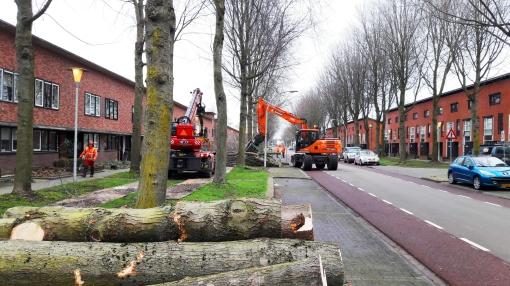 Ruim vijftig bomen gerooid in Klokkengieterlaan