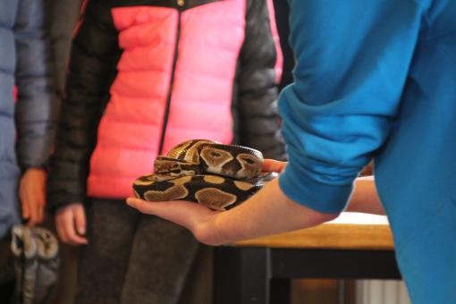Reptielen op bezoek bij Park de Stadshoeve
