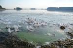 Waarschuwing voor blauwalg blijft gelden voor Milligerplas