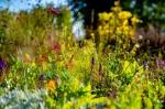 Stadshoeve zoekt vrijwilligers voor bloementuin