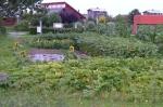 Zelf planten, zaaien en oogsten in jeugdtuin